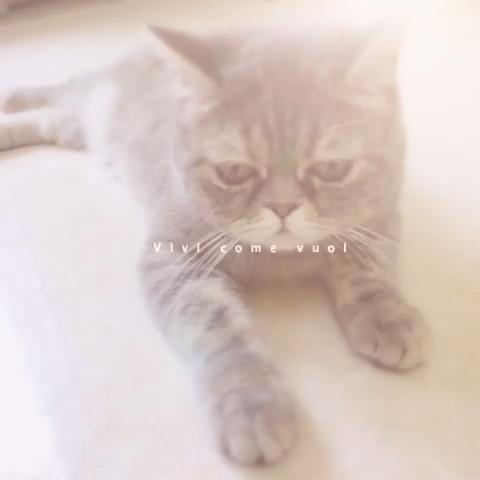 猫咪无精打采
