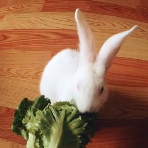 吃素菜的动物有哪些