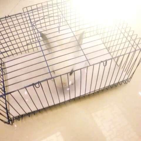 小兔子乖乖钢琴曲谱