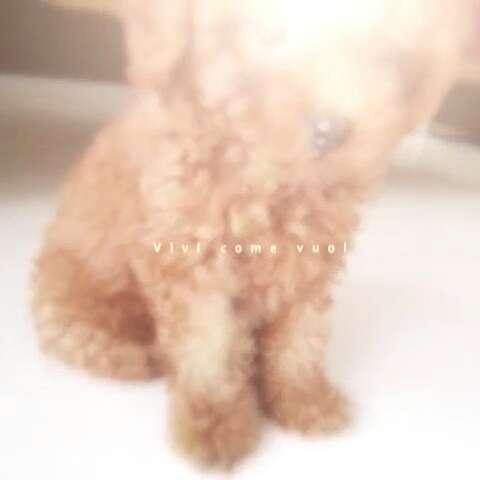 """sumei~的美拍 - 美拍_最火的短视频社区!"""""""