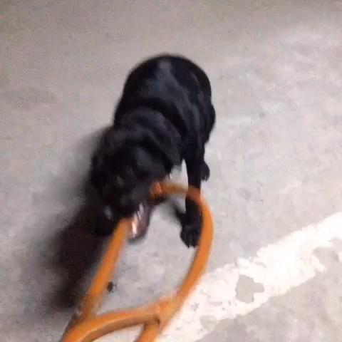 绳子编织的视频