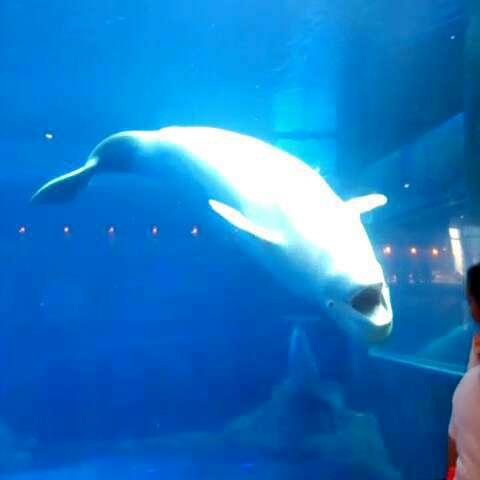 壁纸 动物 海底 海底世界 海洋馆 鲸鱼 水族馆 480_480