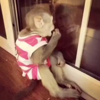 臭美猴吃个东西还照镜子结果😅自己把自己照吐了😂#宠物#