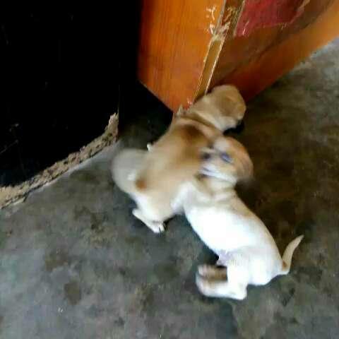 两兄弟打架