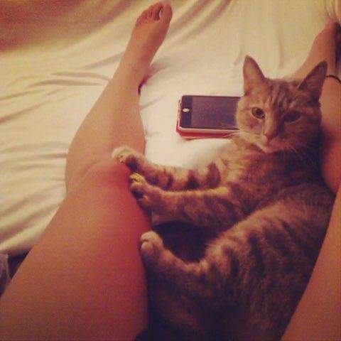 云小咪的按摩工作室#随手拍##宠物##早上好##猫##猫咪##喵星人