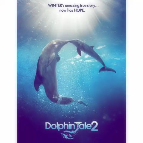dolphin goggles  dolphin tale 2: winter