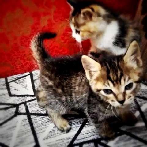 壁纸 动物 猫 猫咪 小猫 桌面 480_480