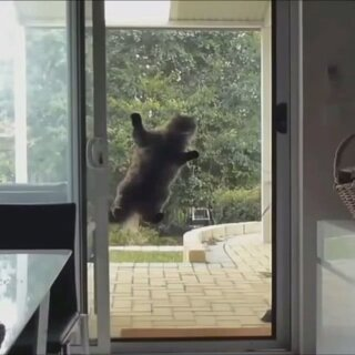 高智商间谍猫<span class=