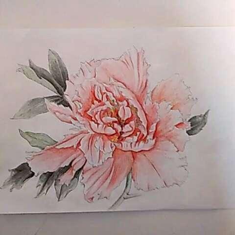 彩铅牡丹花的画法步骤