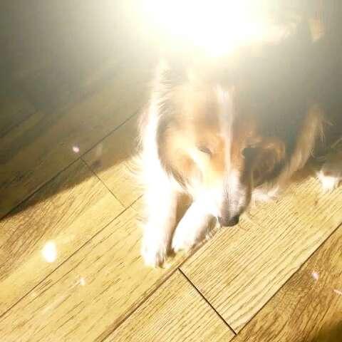 阳光下的大狗砸