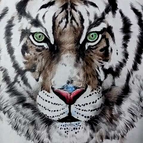 彩铅手绘动物_手绘彩铅小动物