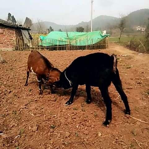 qq农场怎样养狗_qq农场怎么养狗_新手养狗_养狗心得__视频在