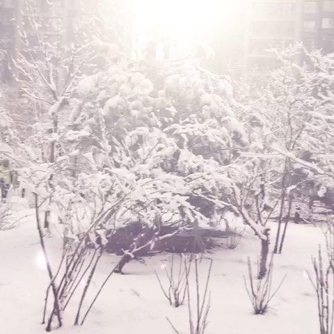 雪花飞舞动态图
