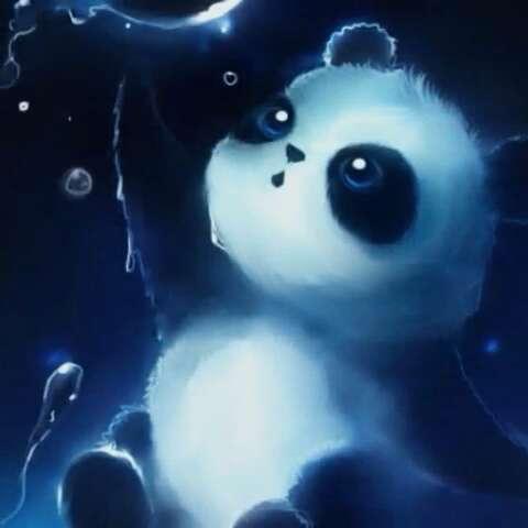萌萌的小熊猫#萌萌哒