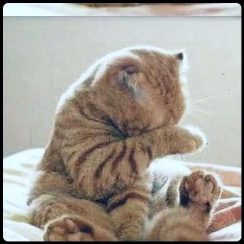 壁纸 动物 狗 狗狗 猫 猫咪 小猫 桌面 480_480