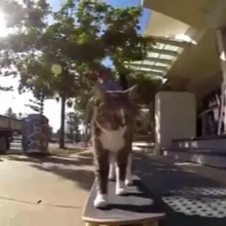 我的滑板猫,一步一步似爪牙,似魔鬼的步伐😎😎#宠物##滑板##我想上热门#