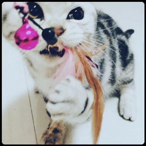 神经猫#呲牙咧嘴的疯魔