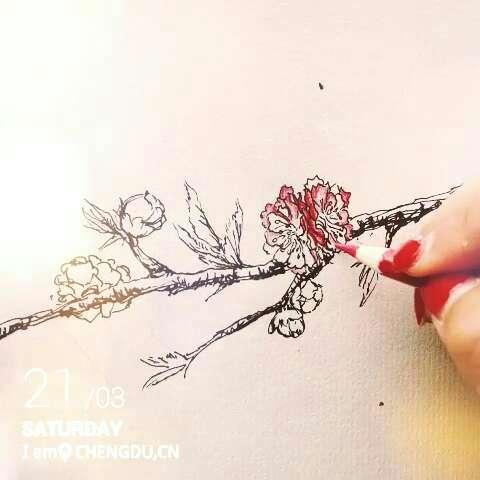 画了一枝桃#手绘彩铅画##手绘画