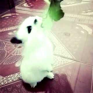 #妈妈再打我一次##妈妈再打我一次##宠物#主银,表逗我了!我好饿,让我好好吃一顿吧!吓银,哈哈突然发现…!怎么会一双穿着不一样鞋子的脚😱,艾玛吓我#60秒美拍##宠物##家有萌宠#