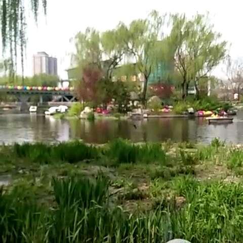 春天公园池塘边小燕子忽高忽低的翻飞,快乐的迎接着游客们,告诉我们