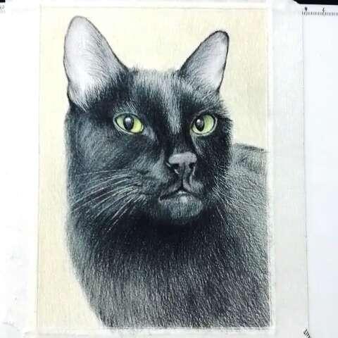 手绘彩铅画#手绘黑猫彩铅画.欢迎定制.画艺坊原创