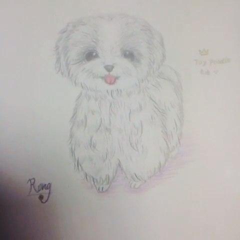 15-04-23 #泰迪##手绘彩铅画##画画#@么么哒的皮卡丘