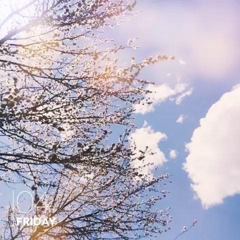 桃花树下有你
