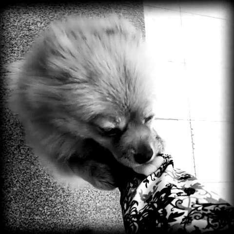 鹿晗与动物图片