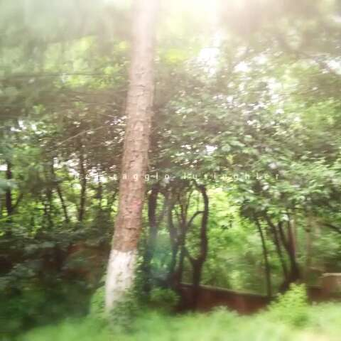 南京红山动物园