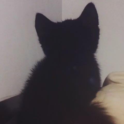 小猫背影 简笔画
