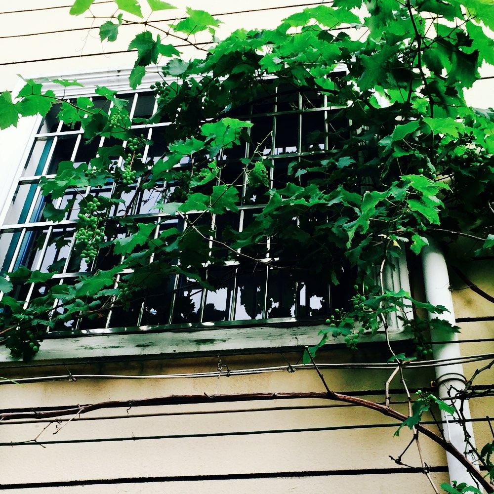 葡萄树上的小秘密的美拍
