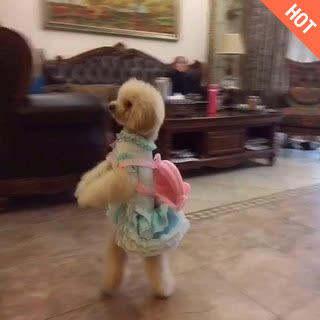 会跳舞的萌狗狗