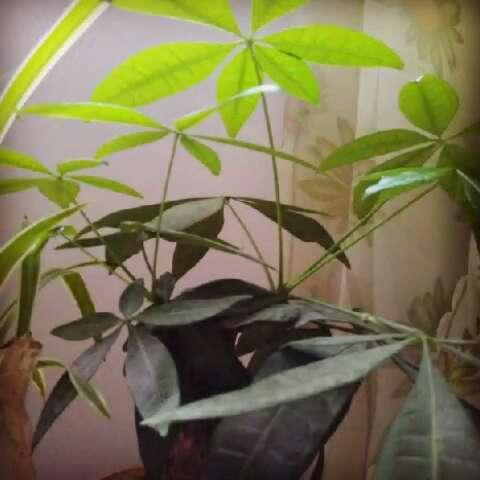 我的小树长大了