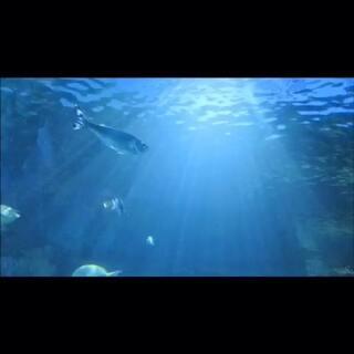 沉迷于那抹蓝和那束光 #旅行##一分钟一座城##带着美拍去旅行##60秒美拍##随手美拍##在路上#
