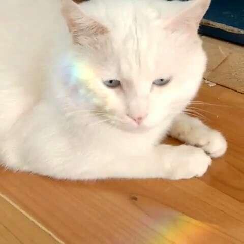彩虹猫 图片