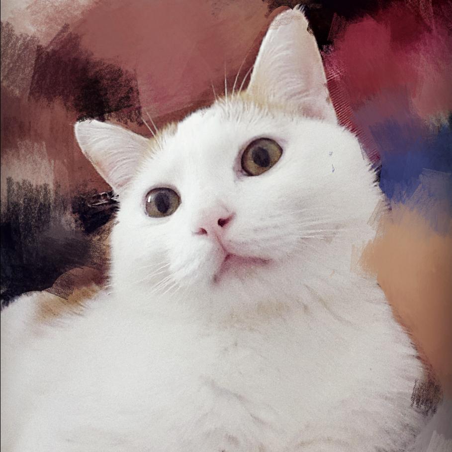 猫雯犬科动物图片