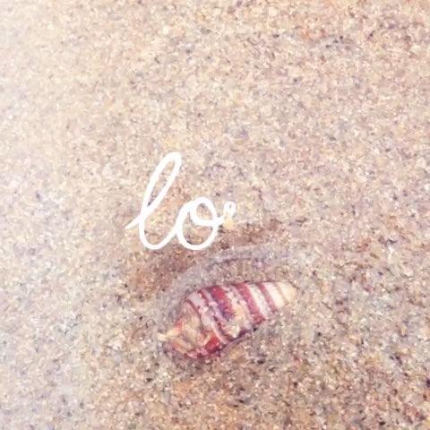 小乌龟冬眠要不要把它们埋进沙子里