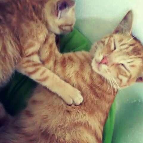 抱着你睡觉的表情雷收表情包图片
