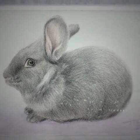 """来看看我拍的视频:""""#手绘彩铅画#手绘兔子. 来自画"""