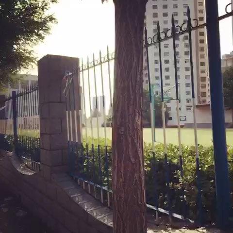河北省,秦皇岛市##青云里小学#我的母校