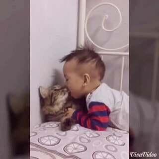 猫咪好无辜
