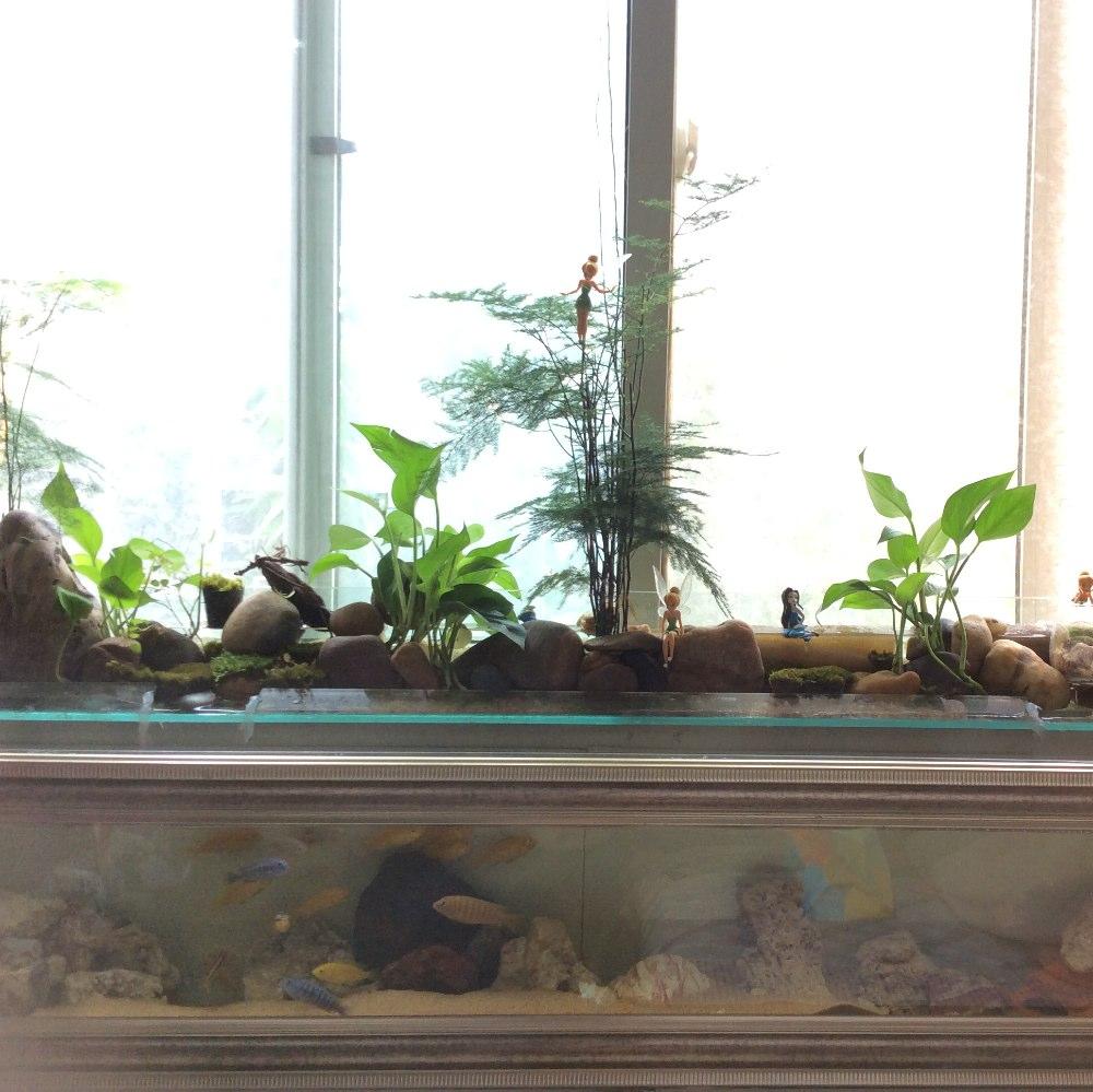 鱼缸盆栽设计图