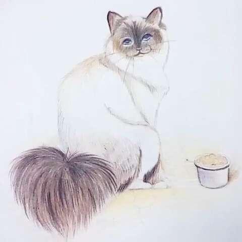 小猫成长日记#手绘##猫咪##宠物##涨姿势##手绘彩铅画##动物彩铅系列
