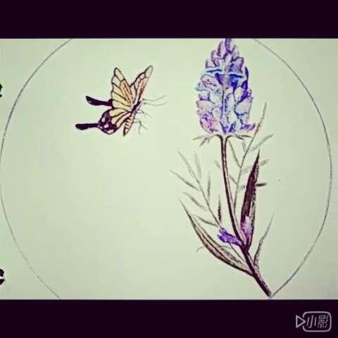 手绘彩铅画##紫色风信子#原创手绘彩铅画风信子