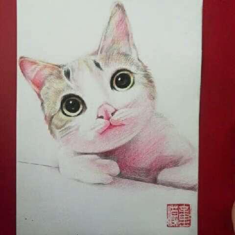 手绘彩铅画##猫咪成长记