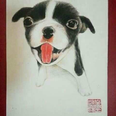 手绘彩铅画##宠物狗狗