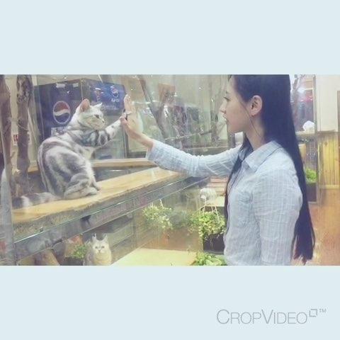 "✋ give me five Qt~ 会击掌的喵"""