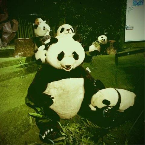 呆萌的玩具熊猫