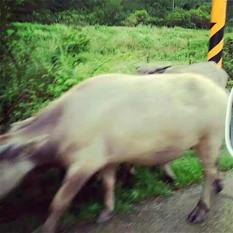 农村实拍动物图片大全