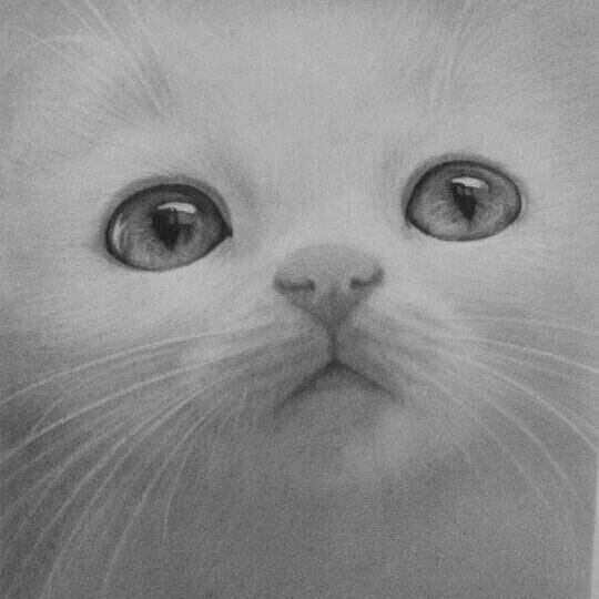 铅笔画 白喵喵 #一分钟手绘大赛